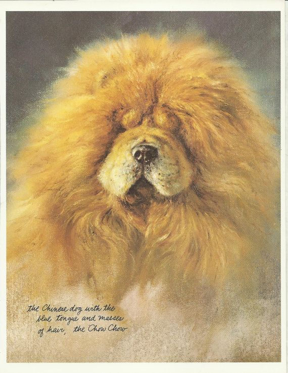 Chow Chow By Rien Poortvliet 1983 Colour Dog Print Dog Portraits