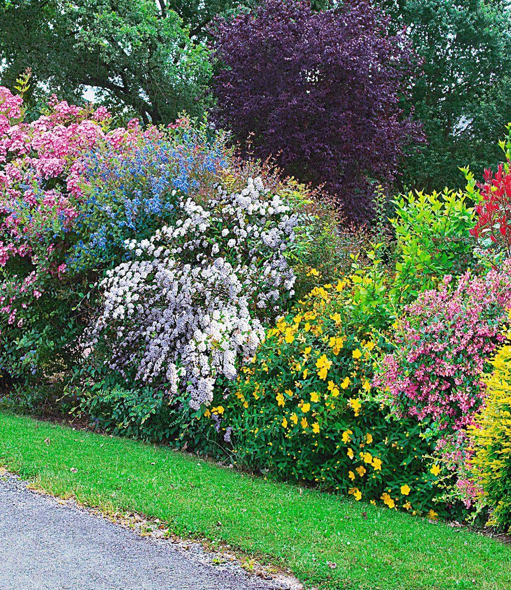 Sommer Hecken Kollektion Top Qualitat Kaufen Sichtschutz Garten