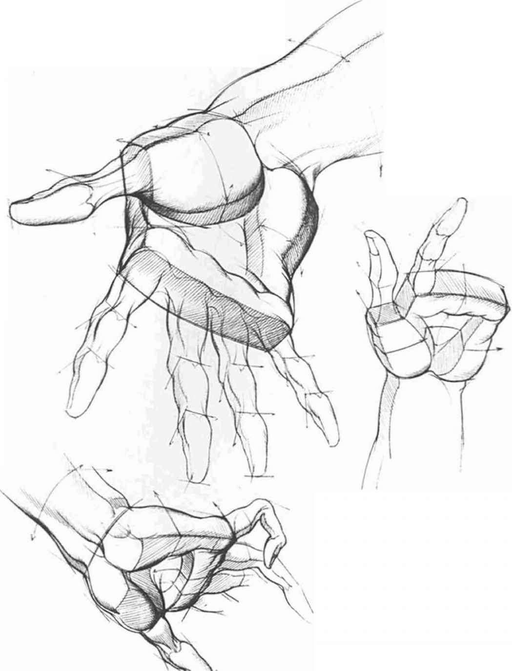 Drawing The Hand Different Position   Art sources/turorials ...