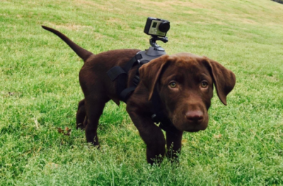 Best Dog Collar Camera for 2016 Dogs, Pet cam, Best dogs