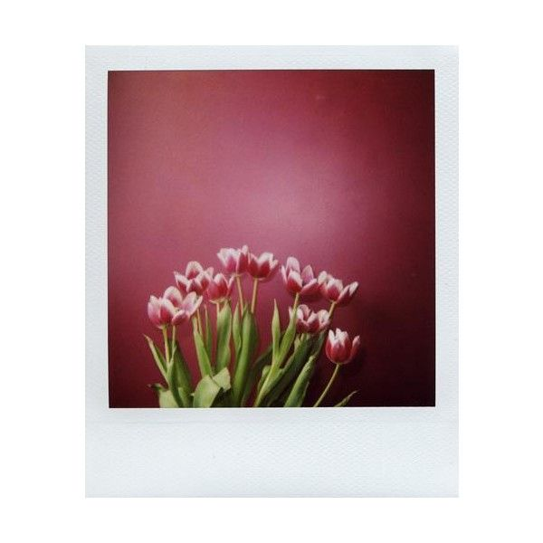 ❤ liked on Polyvore featuring polaroids, backgrounds, pictures, photos, flowers and fillers