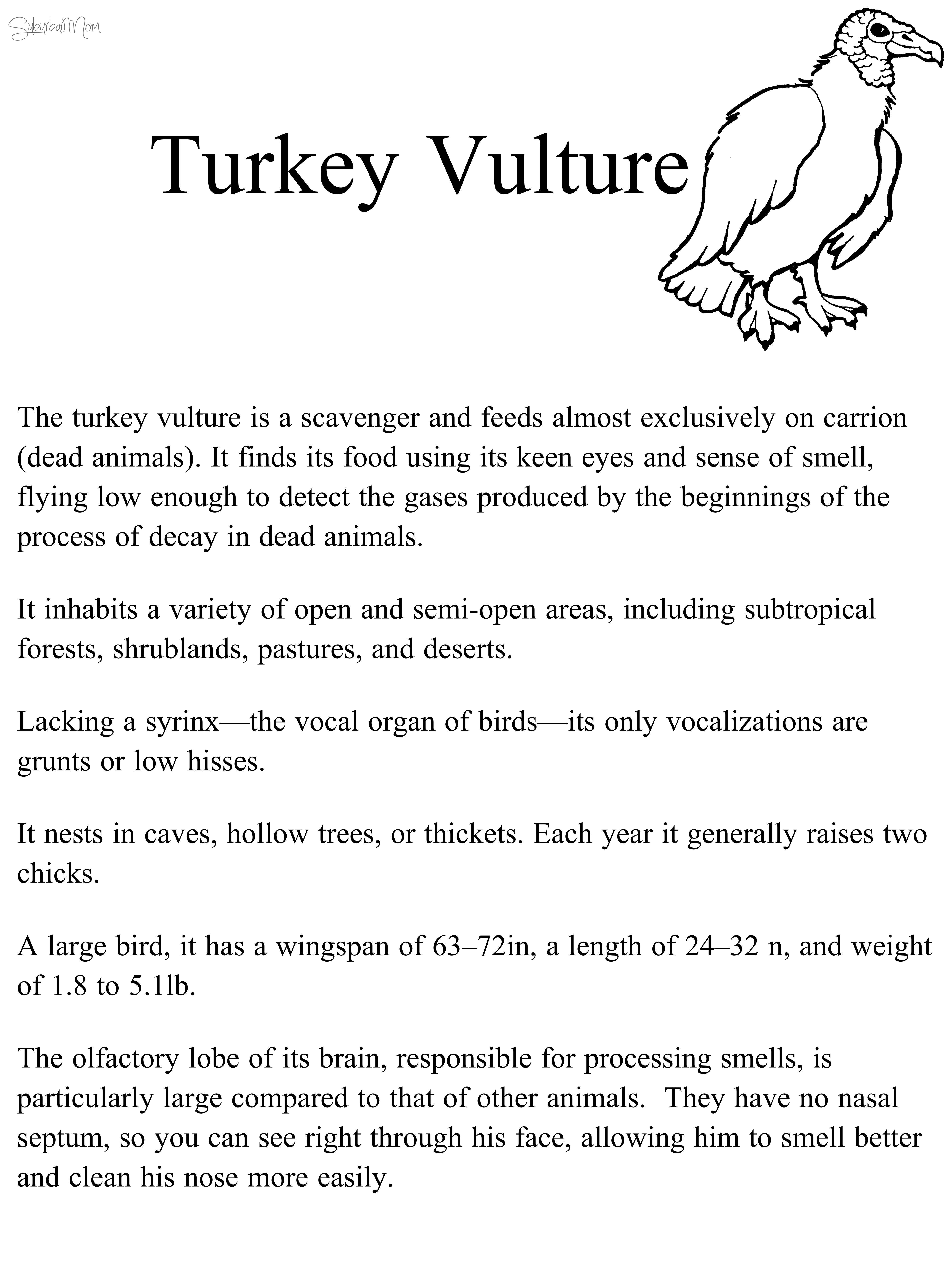 turkey vulture, habitat, science, natural science, interactive, 1st ...