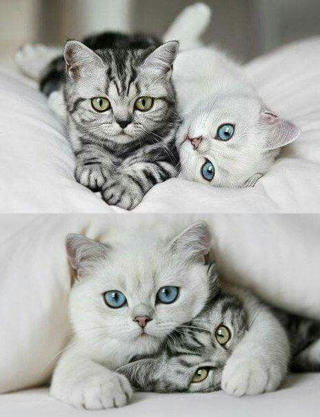 I Want These Kitties 3 Cute Cats Kittens Cutest Cute Animals