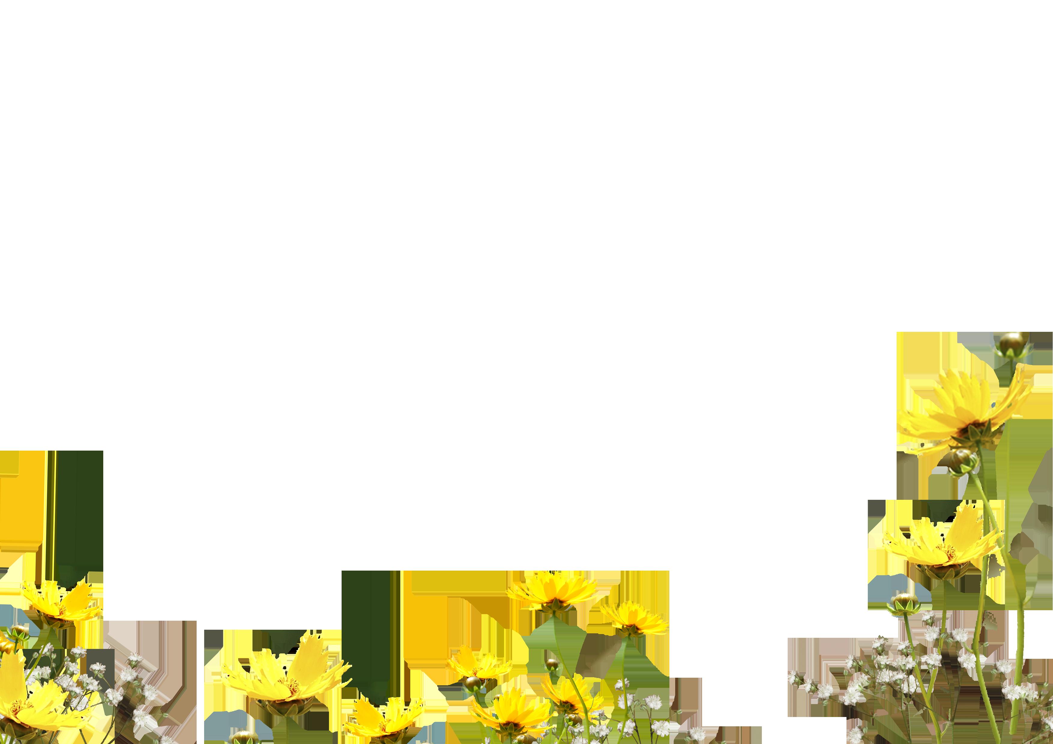 Free Flower Photo Overlay Photoshop Overlays From Mroverlay Photoshop Overlays Photo Overlays Desktop Wallpaper Art
