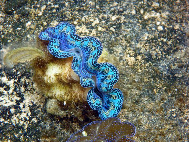 Palau via Flickr.