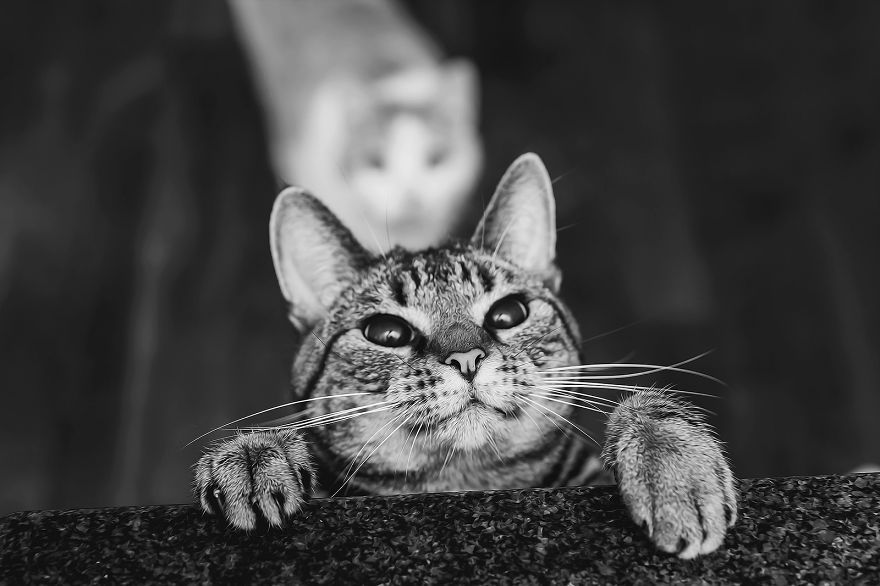 Photographing Cats Helps Me Deal With My Insecurity And Dark Past | Bored Panda