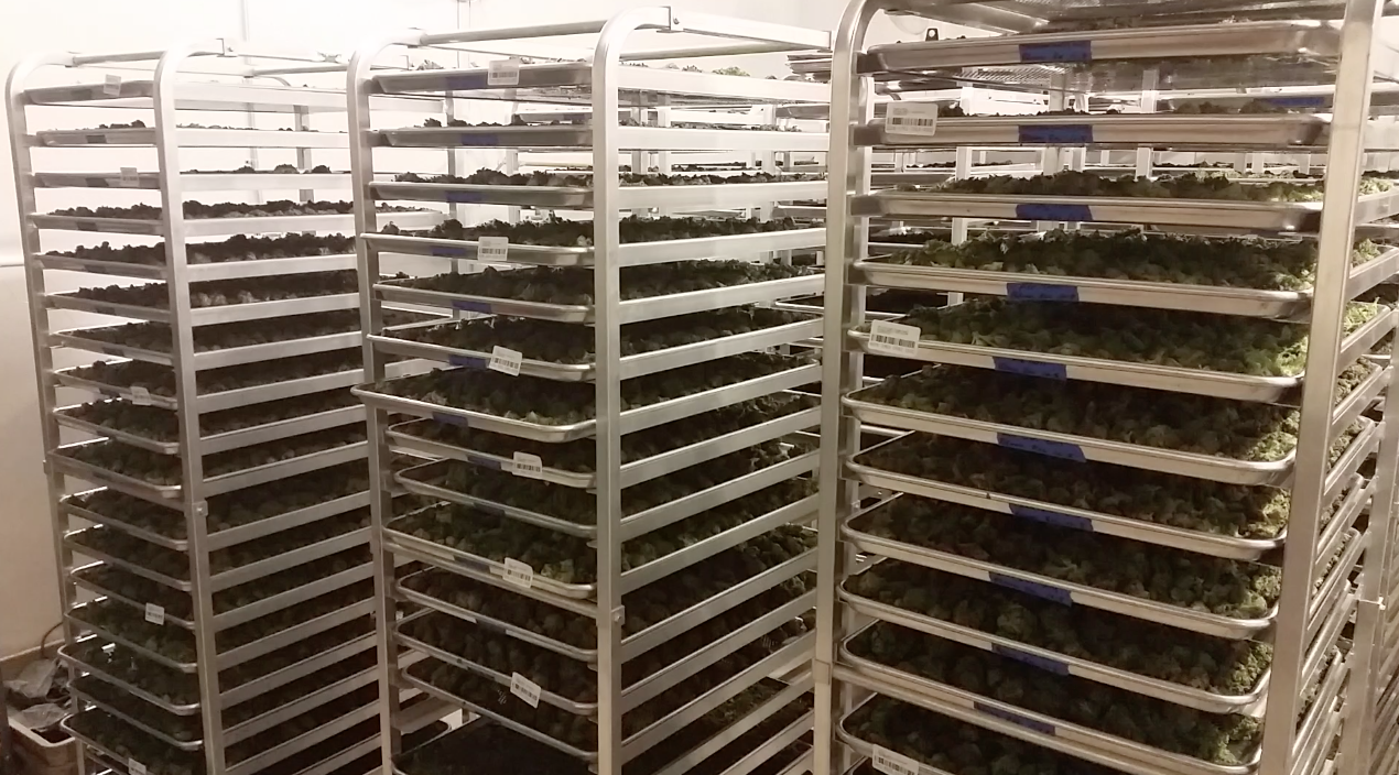 Cannabis Drying Rack Extraordinary Seaporte Is The Platform For Professional Support Services Cloud Design Ideas