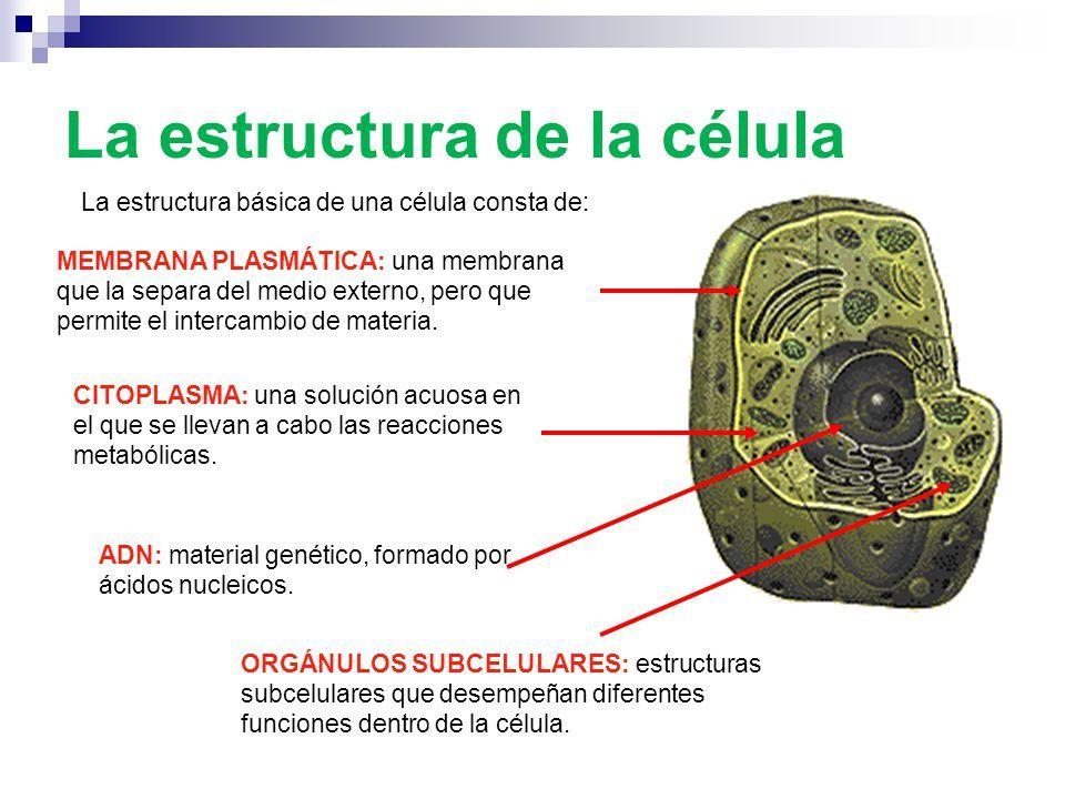 la célula es la unidad anatómica funcional y genética de los seres ...