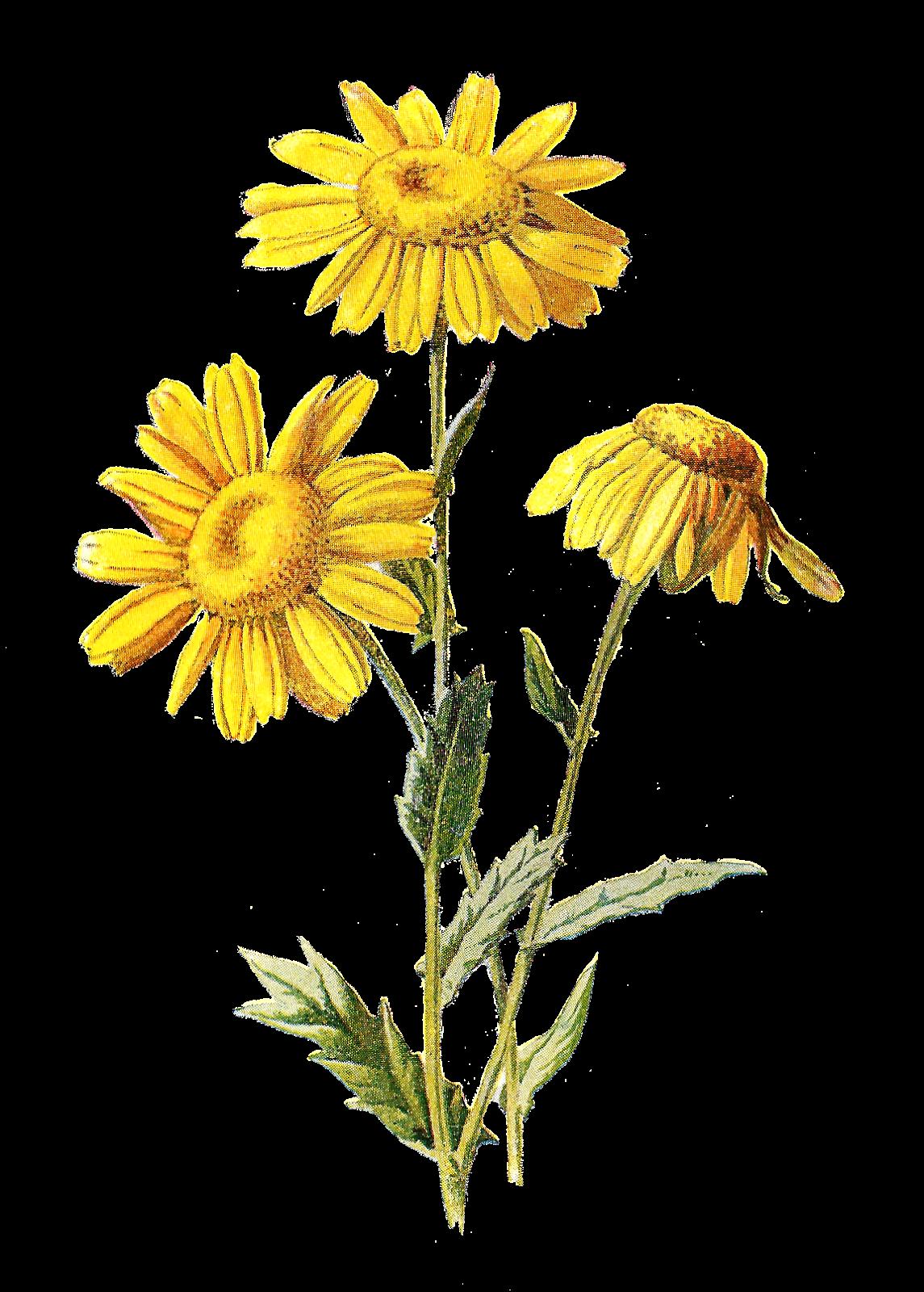 digital flower clip art digital flower clip art digital