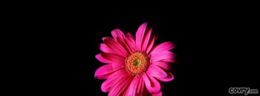 Black And Pink Facebook Covers Floral Wallpaper Flowers Pink
