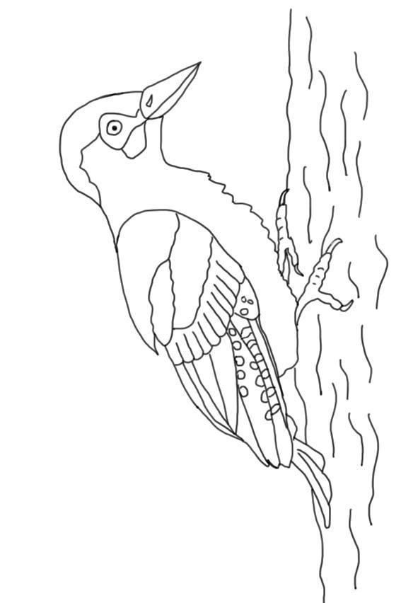 Der Grünspecht ist der Vogel des Jahres 2014. Grünspecht als ...