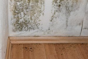 How Much Does Professional Mold Removal Cost