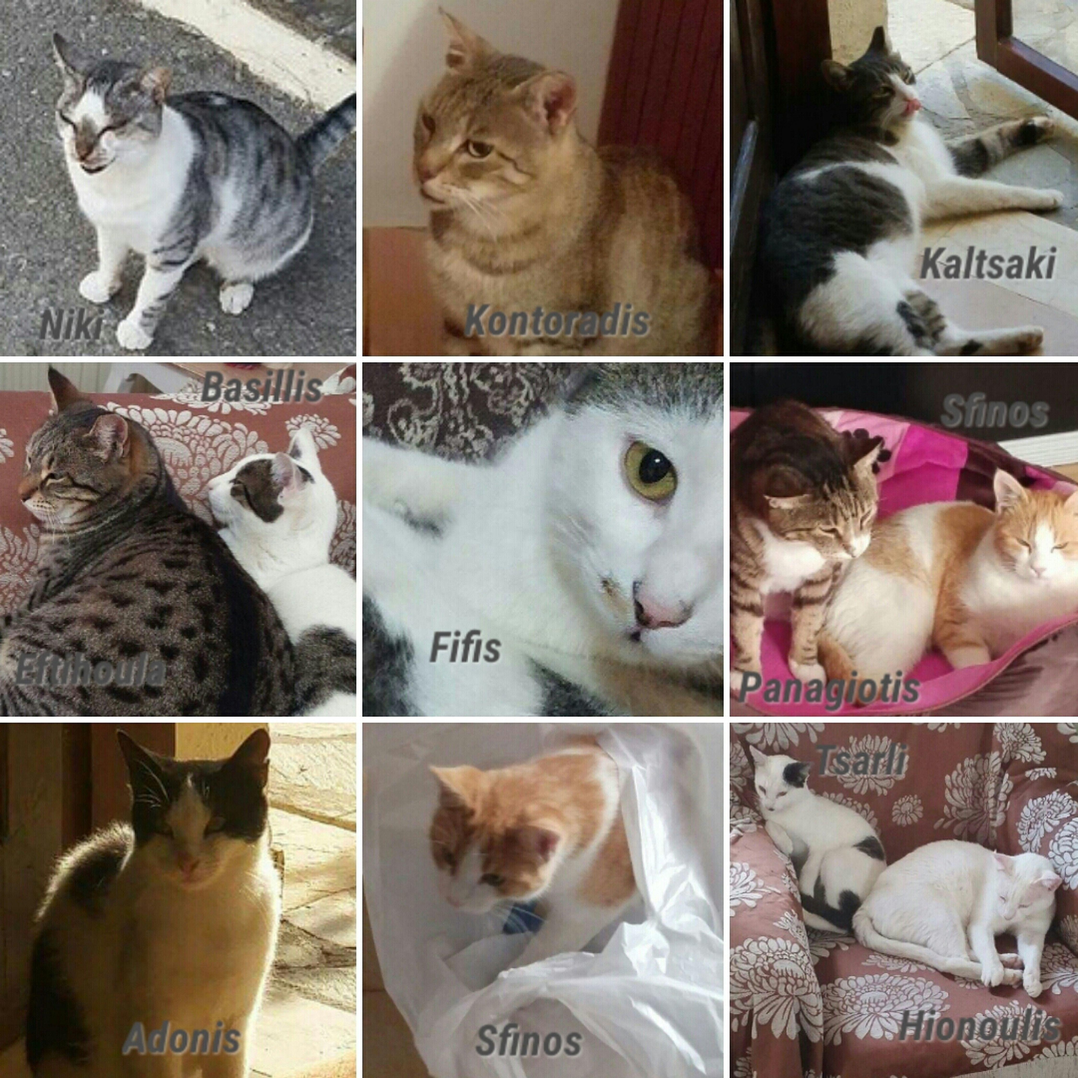 Pin Auf Crowdfunding Projekt Fur Strassenkatzen Und Strassenhunde