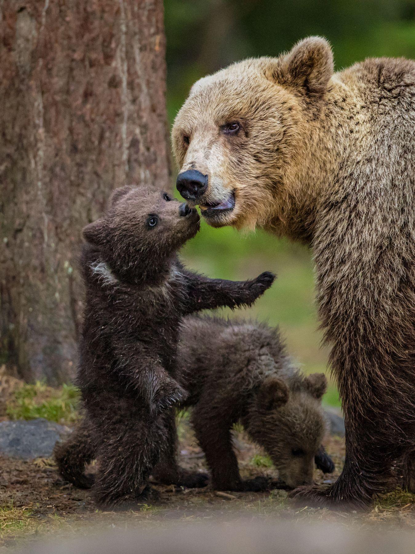 Веселая картинка с медвежонком