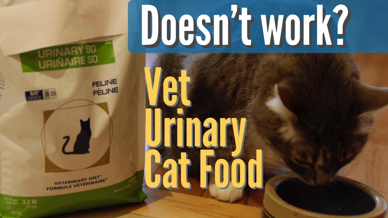 Should you feed your cat with this? Veterinary, Dry cat