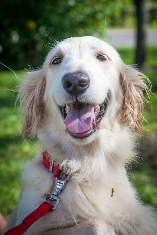 Adopt Julie 592 On Dogs Dogs Golden Retriever Dogs Kids