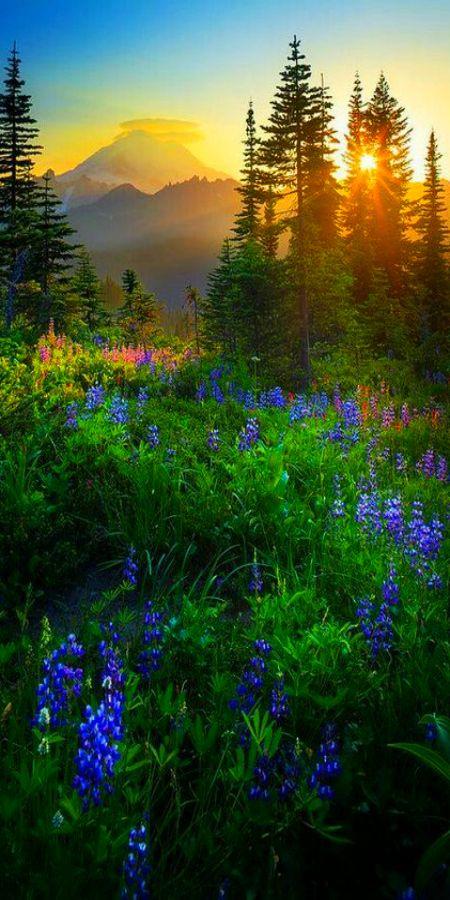 Mount Rainier Sunburst Photographic Print By Inge Johnsson In 2020 Beautiful Nature Nature Photography Scenery