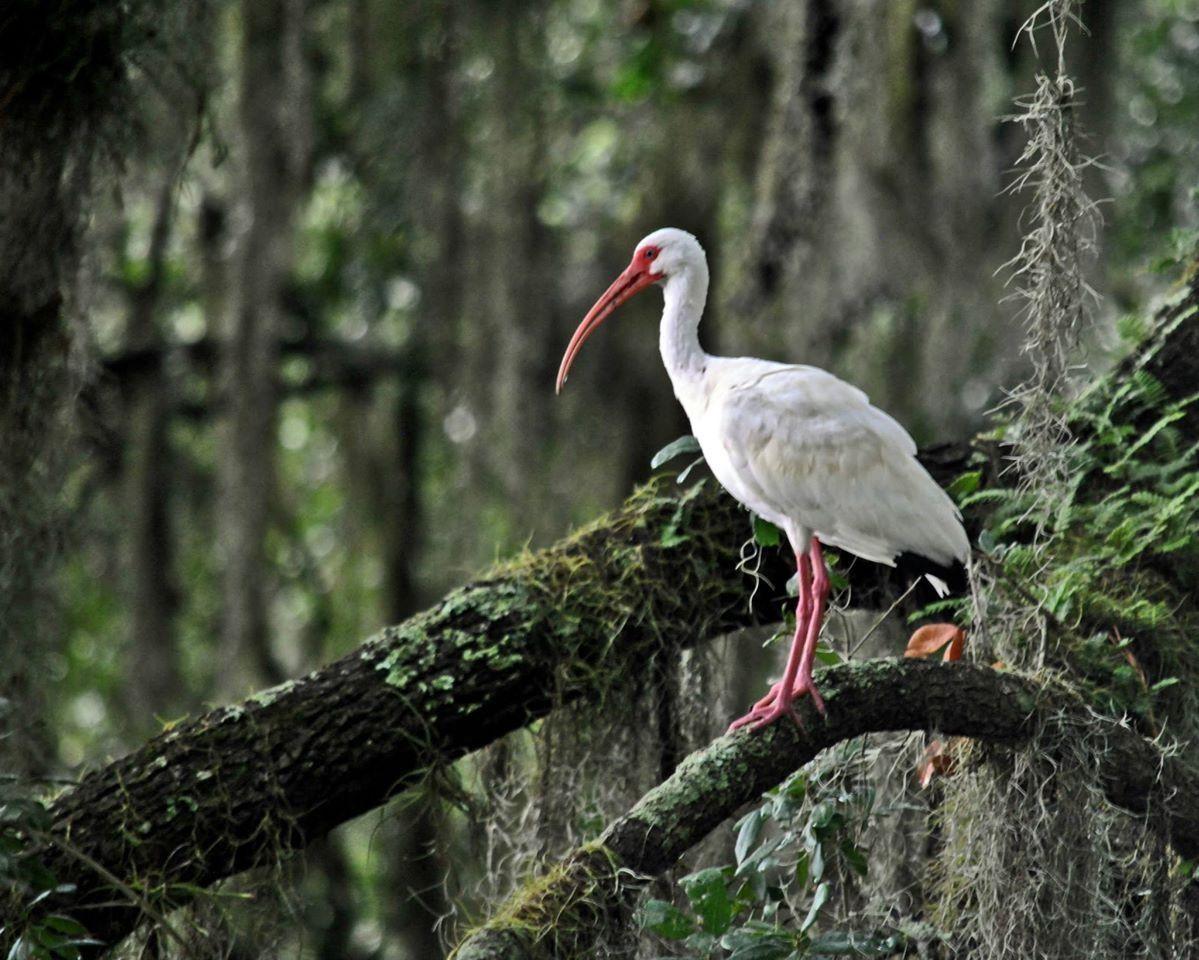 Lake Alice Gainesville, FL Scenic views, Scenic