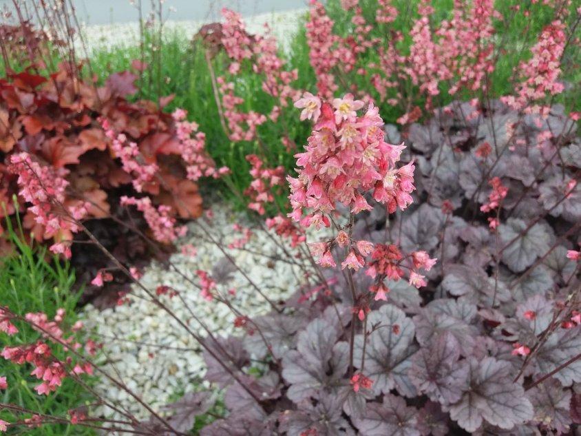 Kwiaty Do Cienia Co Posadzic Na Cienistej Rabacie E Ogrodek Plants Garden Grapes