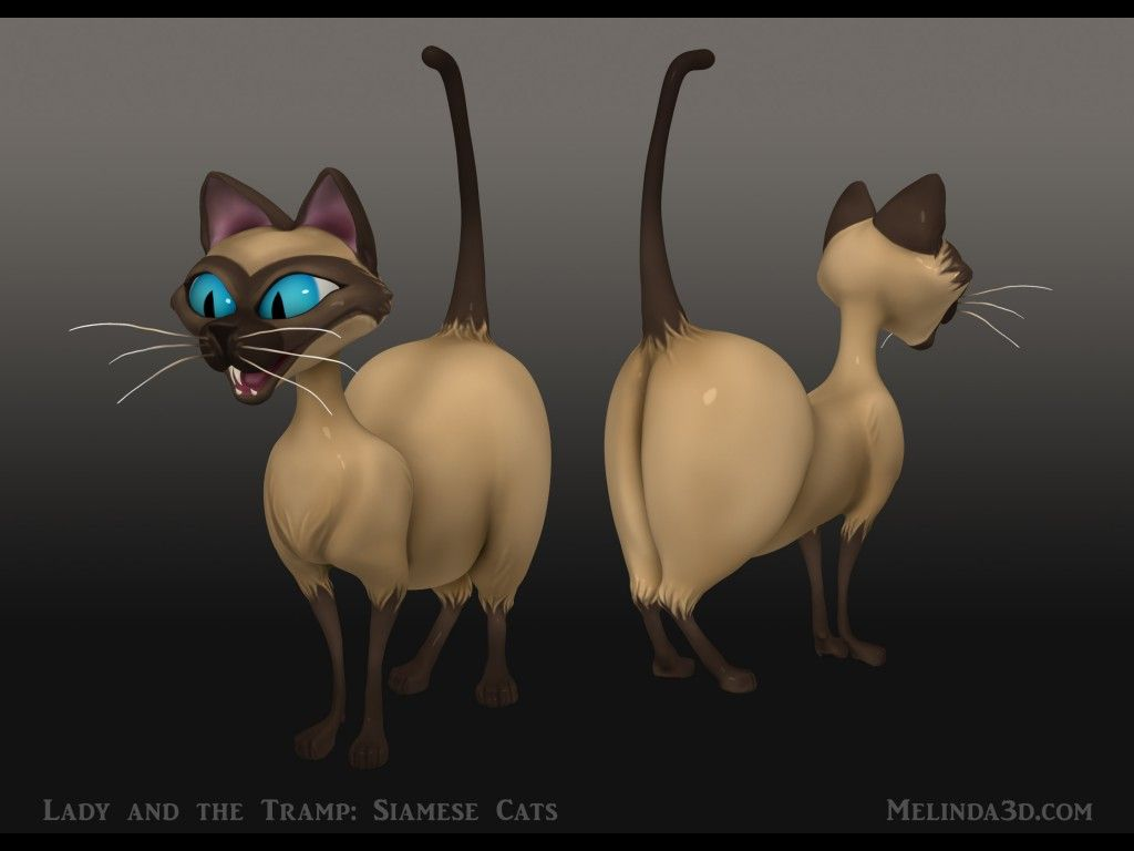 Lady And The Tramp Siamese Cats Siamese Cats Siamese Cats Funny Lady And The Tramp