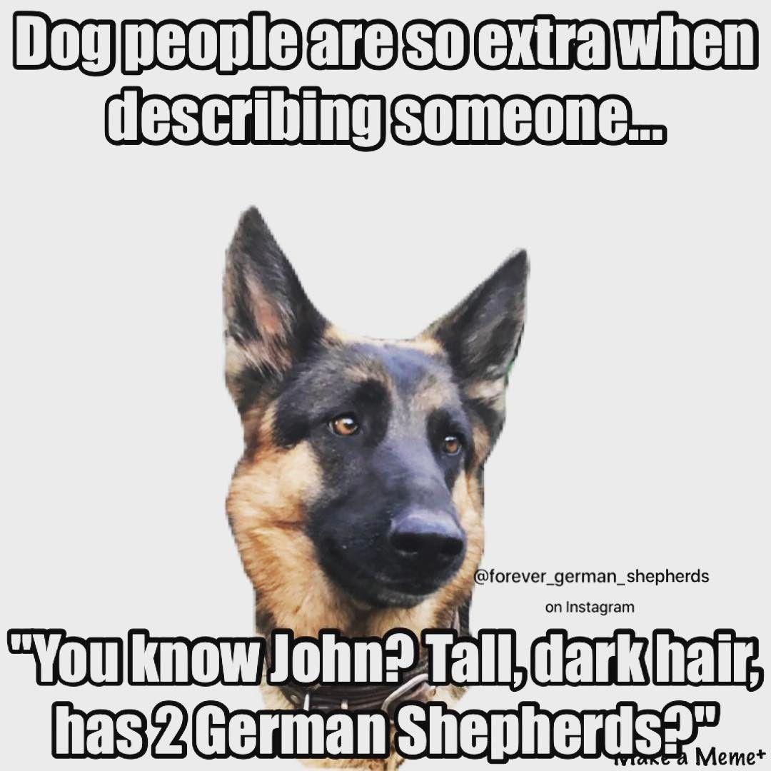 Raw Fed Dogs Eat A Deer German Shepherd Memes German Shepherd