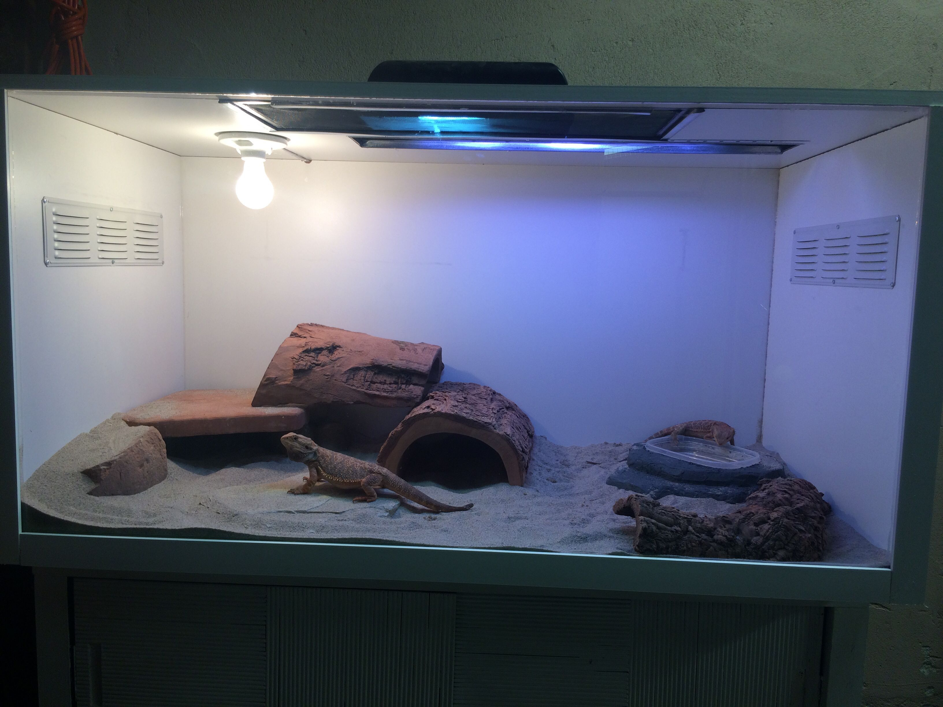 Diy Bearded Dragon Enclosure 4x2x2 72 Melamine Board 30 Home