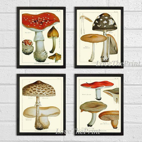 50 Cool And Creative Shabby Chic Dining Rooms: Mushroom Print Set Of 4 Art Antique Beautiful Botanical