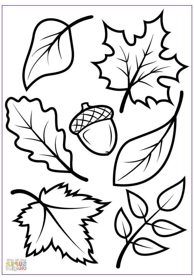 15 Elegant Fall Coloring Sheets Printable Photos Printable Fall Leaves Leaf Template 15 Elegant Leaf Coloring Page Fall Coloring Sheets Fall Leaf Template