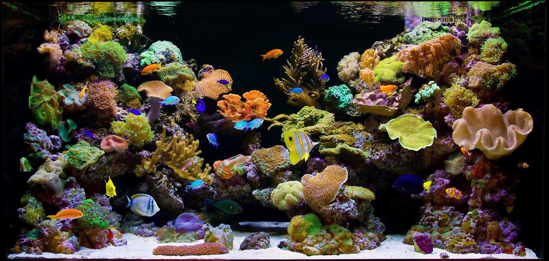 Aquarium Design Group   A Splendid Reef Aquarium Scene