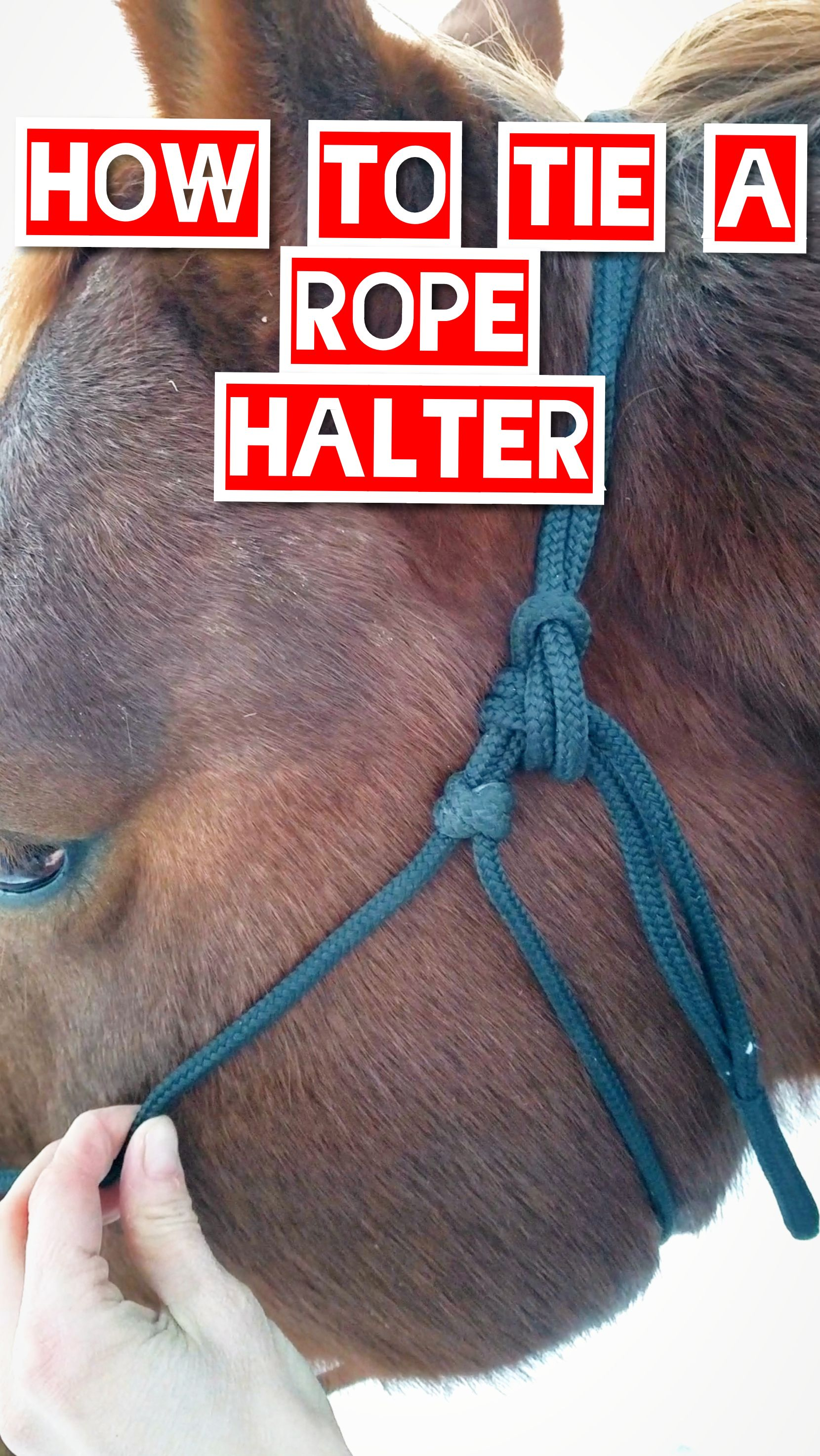 How To Tie A Rope Halter On A Horse Rope Halter Horses Halter