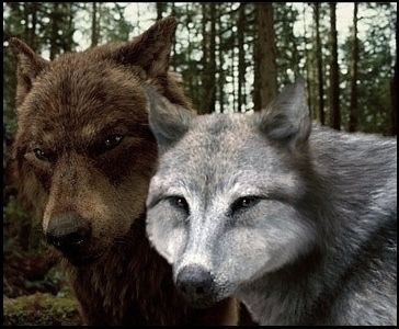 Jacob & Leah -Wolf- | Werewolves | Twilight wolf, Twilight wolf pack