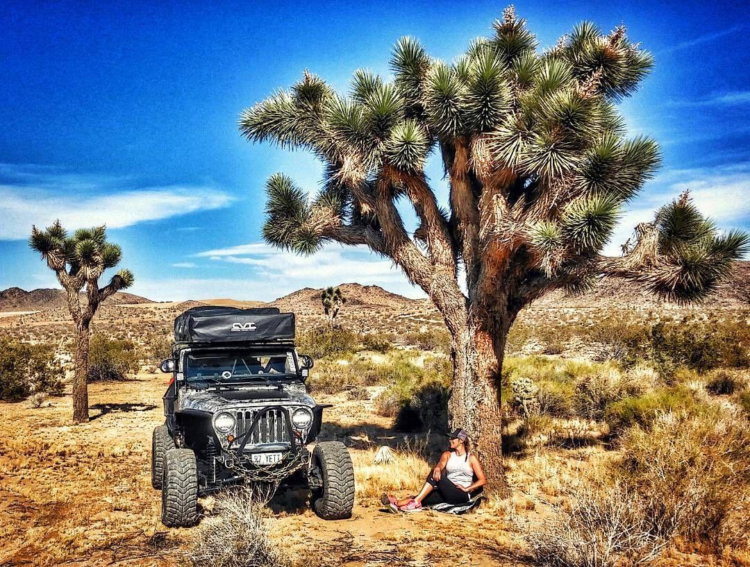 Making the Most out of these Long Hot Miles  The Joshua Trees Love the Company!  #DesertGypsy    #BeTheAdventure #JoshuaTree #Desert #ChasingSunsets #WildAndFree #ForeverYoung #LifeOfAdventure #LetsRollYeti to #GiantRock #GoodVibes #PositiveEnergy #FreeSpirit #OutlawWoman #Jeep #AdventureMachine #TravelingTreeHouse #TheRoadGoesOnForever #DreamBig #LiveFree #EnjoyTheStruggle #MakeTheMost #EnjoyThisLife #LiveYourDreams #MyJeepStory #Jeepher #YetiandYolo #LiveAdventurously  #WildYolo  by…