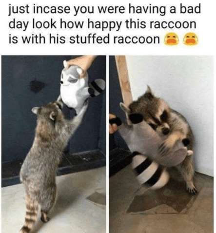 50 Funny Memes And Posts For The Animal Lovers #animalmemes