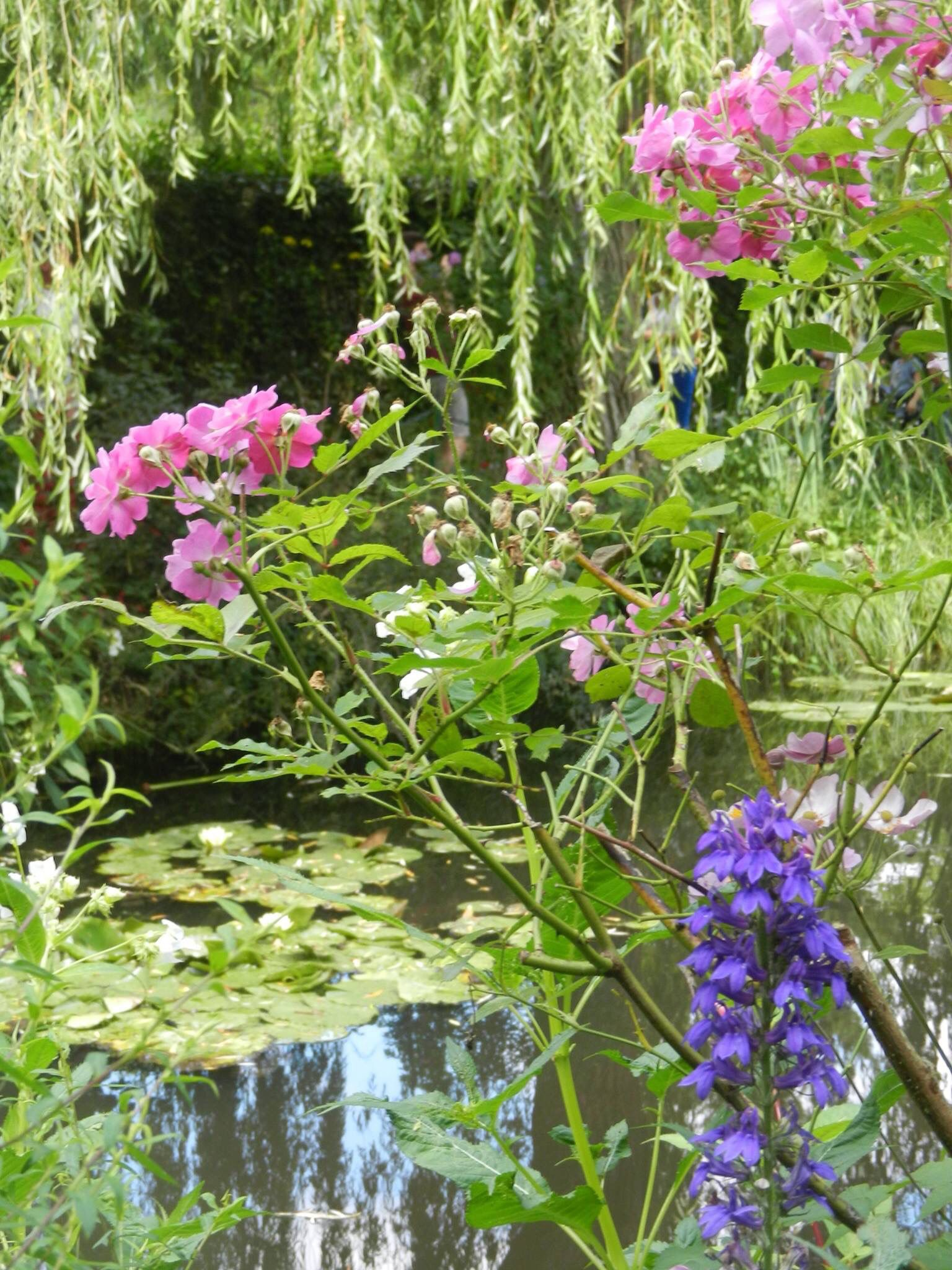 Pedacinho do Jardim de Monet.