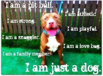 I am just a dog..,