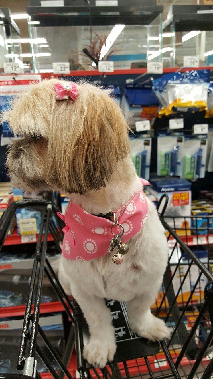 Shih Tzu Shopping Shih Tzu Animals Dogs