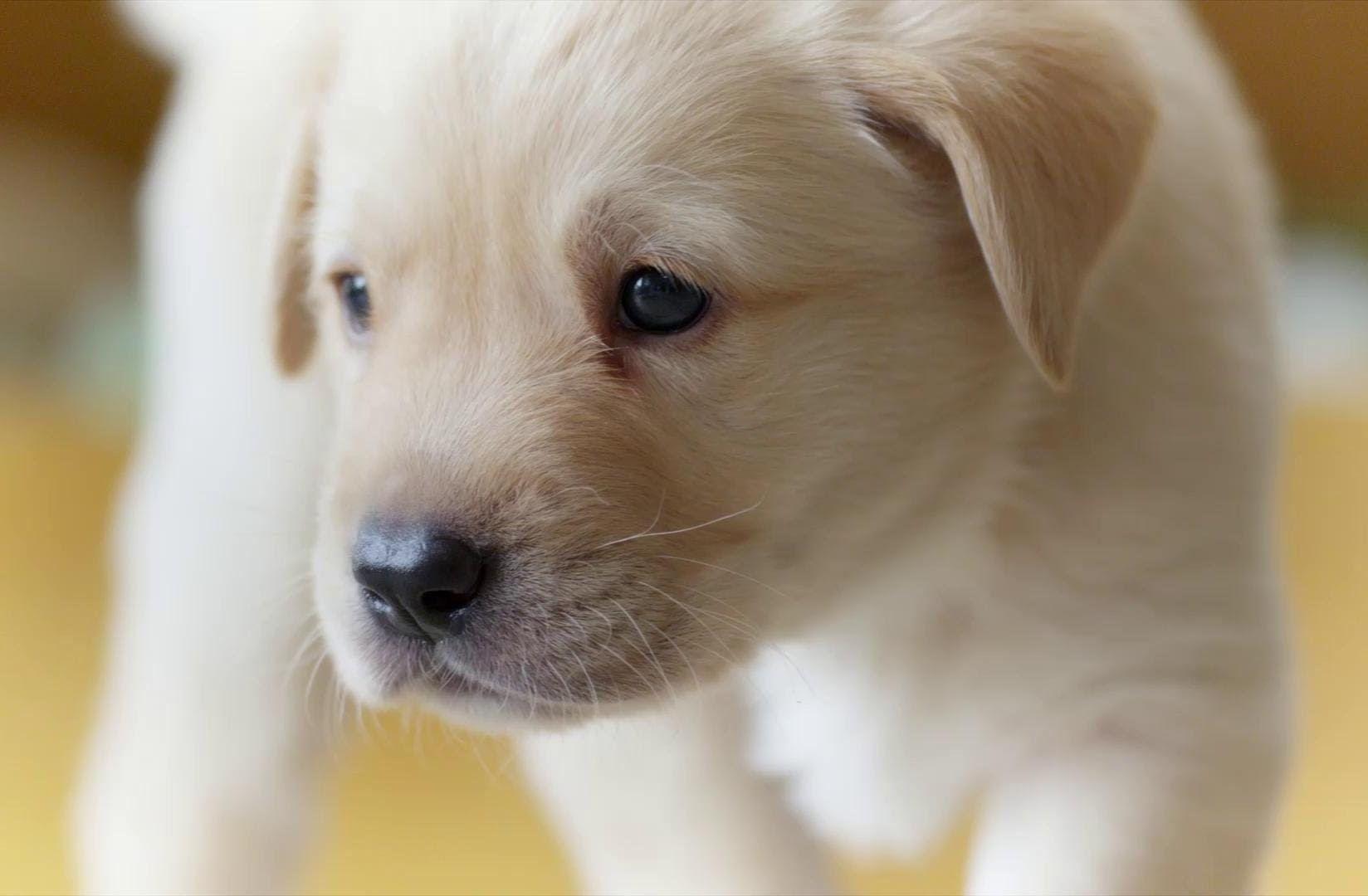 Puppy Cutedog Cutedogs Fordirtydogs Organicdogshampoo Dogshampoo Doggrooming Mansbestfriend Dog Dogs Secret Life Of Dogs Indoor Dog Kennel Indoor Dog