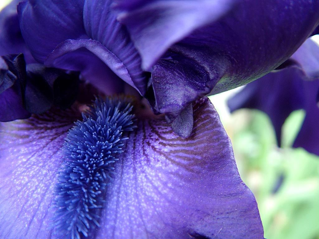 All the colors of the iris flower flowers image purple iris flower all the colors of the iris flower flowers image purple iris flower alphabet flowers picture code izmirmasajfo