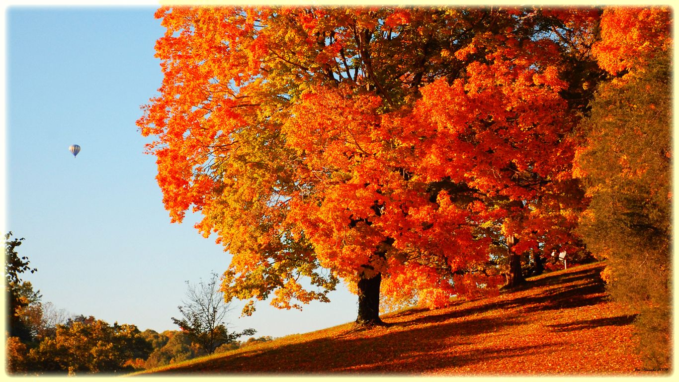 Orange Fall Trees Google Images Fall Wallpaper Autumn Trees Desktop Wallpaper Fall
