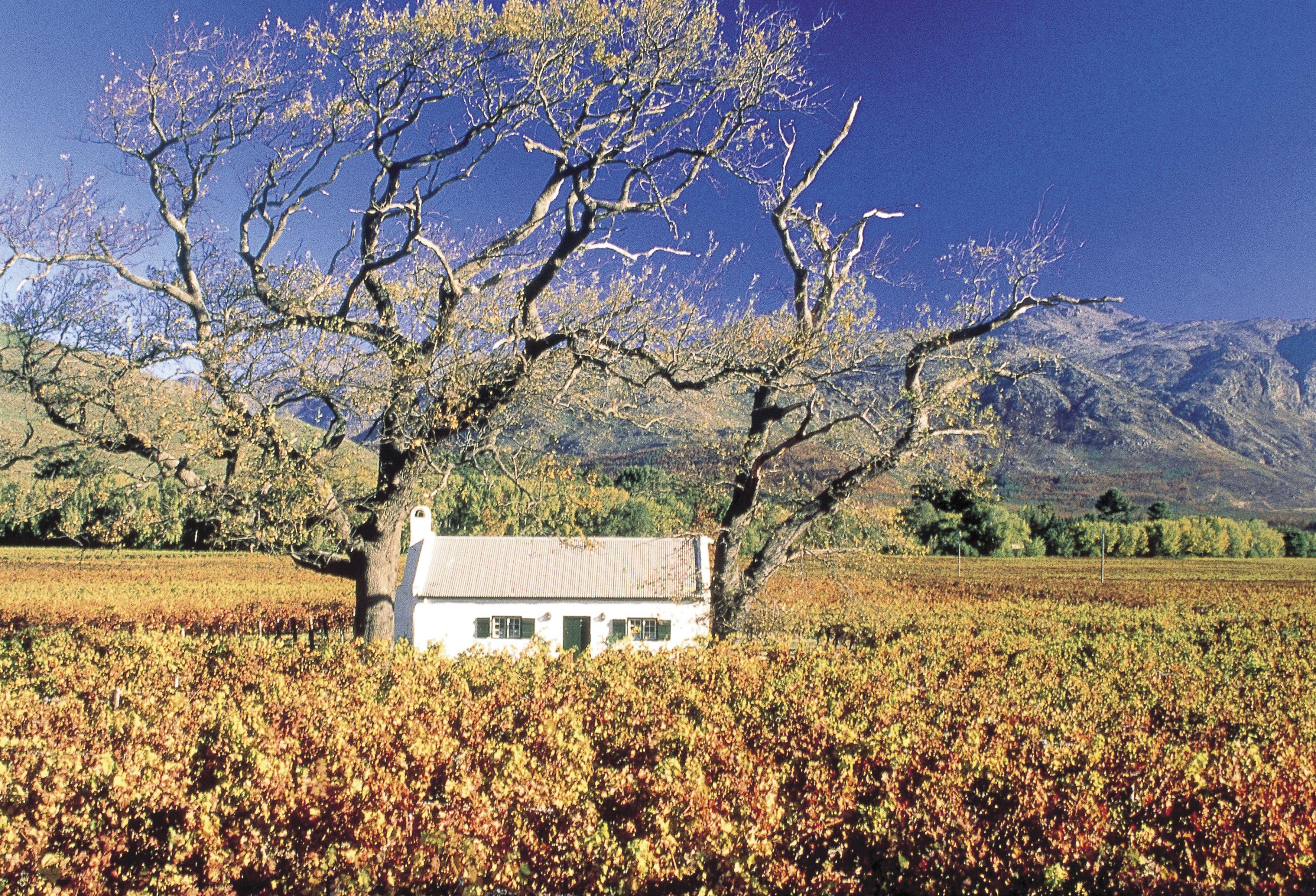 La Motte Veepos Lamotte Wine Food History Franschhoek Culture Art House Styles Franschhoek