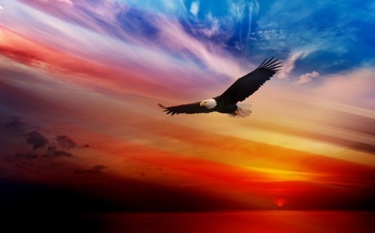 Pin By Martin Sampa Ndibi On Me Gusto Eagle Wallpaper Eagle Images Cool Wallpapers For Phones