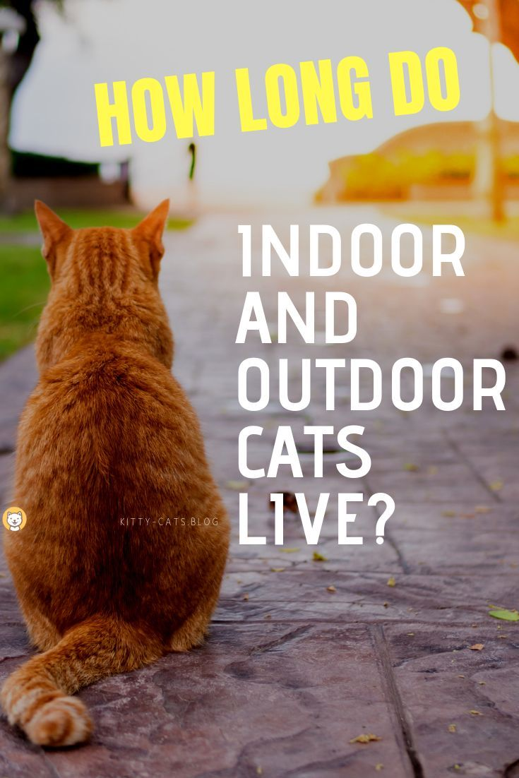 How Long Do Indoor and Outdoor Cats Live Outdoor cats