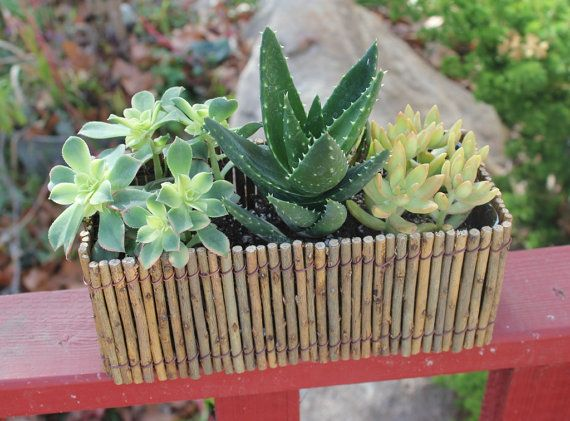 """Succulent Natural Twig Wedding 12"""" Centerpiece with 3 Succulents potted in 4"""" containers on Etsy, $20.00"""
