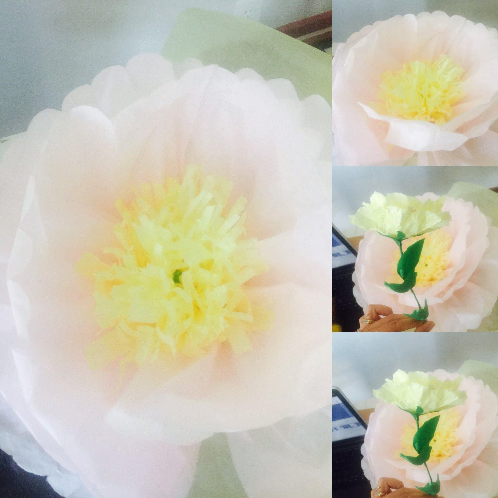 Tissue Paper Giant Flower Tutorial Handmade Flowers Pinterest