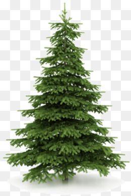 크리스마스 송 측백나무 성탄 크리스마스 트리 측백나무 식물 Png 및 벡터 에 대한 무료 다운로드 Tree Clipart Tree Christmas Tree Clipart