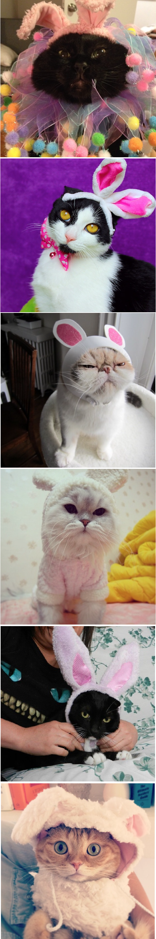 Five cats unhappy about Easter.