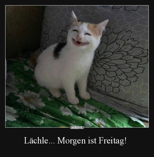 Besten Bilder, Videos und Sprüche und es kommen täglich neue lustige Facebook Bilder auf DEBESTE.DE. Hier werden täglich Witze und Sprüche geposte… – Mike Snow – Olish Wish