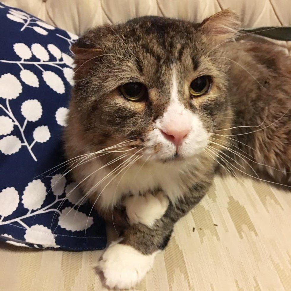 Cat Lived A Rough Life Finds Love And Gets Happiness Back Into His Beautiful Eyes Cats Cat Love Animal Rescue Stories