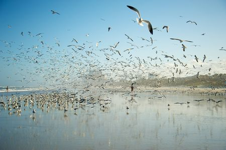 Flight of the Gulls Photo by G. Stone -- National Geographic Your Shot