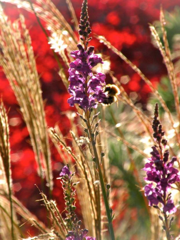 Pflegeleichte Pflanzen und Bienenweiden